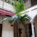 Casas de la Judería en Sevilla