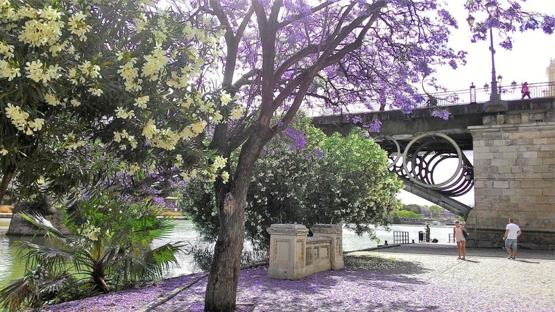 Bajo el puente de Triana