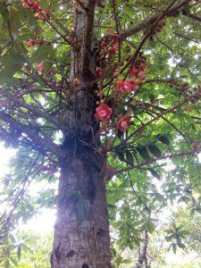 Jardines de la Pagoda de Thien Mu
