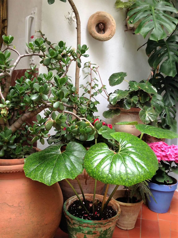 Plantas en Juan Rufo