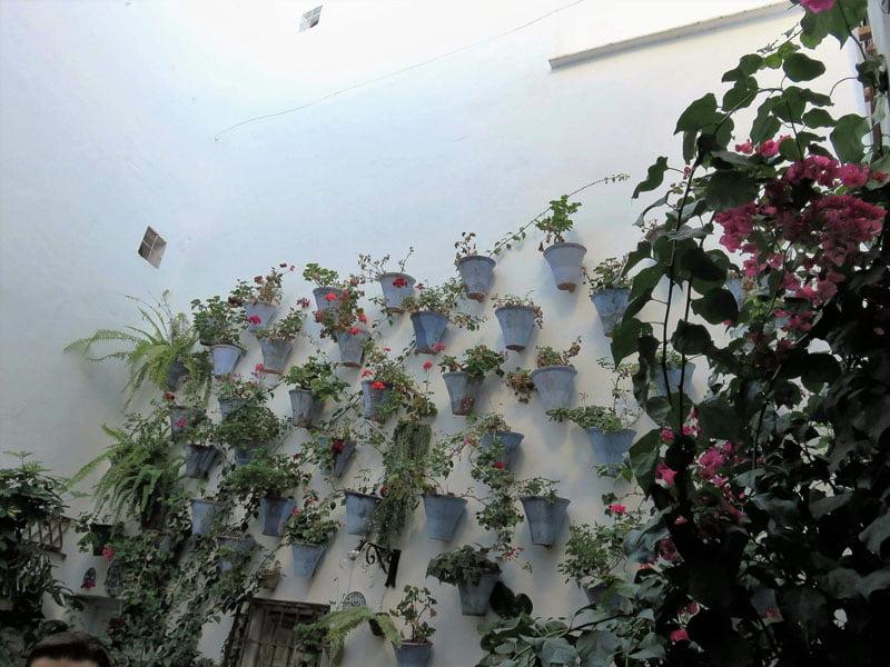 El patio Juan Rufo en otoño