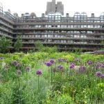 Nigel Dunnett Gardens