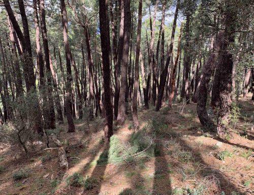 El Frente del Agua en la Sierra Norte de Madrid
