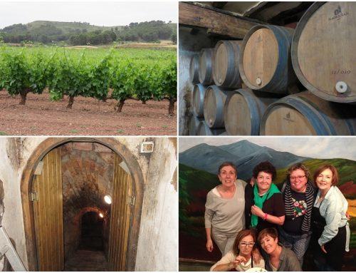 Aprendiendo del vino en una bodega de Hormilla en La Rioja