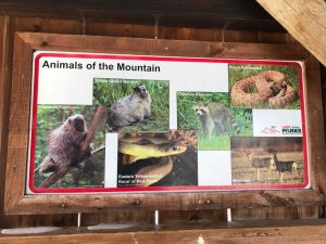 Animales que habitan en Bear Butte State Park